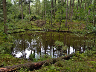 A pond in a bavarian forest