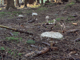 Mushrooms in a bavarian forest