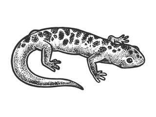 Salamander lizard animal sketch engraving vector illustration. T-shirt apparel print design. Scratch board style imitation. Black and white hand drawn image.