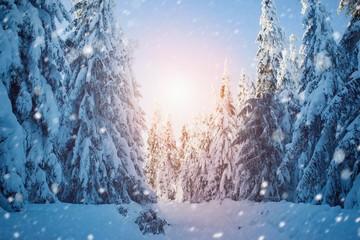 Beautiful winter snowy landscape, forest