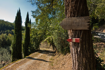 Junction with a big tree to trekking trail on a gravel back road surrounded with cypress trees, near Vinci, Tuscany, Italy