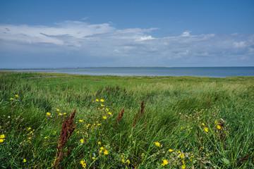 View over the north sea near Dornum (Dornumer Siel)
