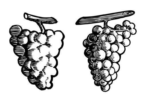 bunch of grapes, decorative line drawing and linocut, black and white clipart