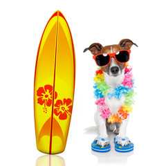 Keuken foto achterwand Crazy dog summer paradise vacation surfer dog