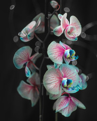 Photo sur Plexiglas Orchidée orchid on black background