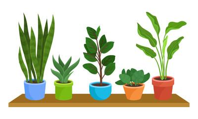 Five Green Houseplants In Colorful Pots On Shelf Vector Illustration Set