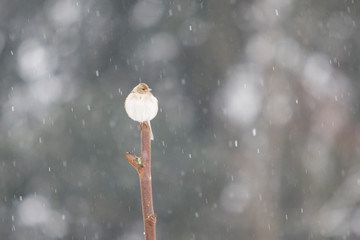 Bird perched on a stick under the snowfall.