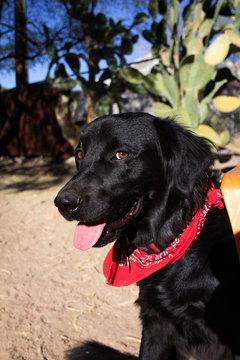 cute black dog in desert park cactus