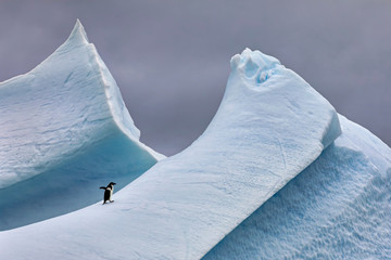 Foto op Plexiglas Grijs Adélie Penguin on Steep Iceberg