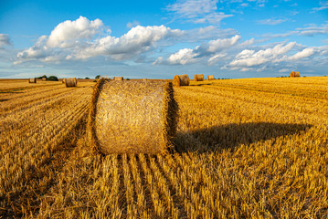 Bales of Straw on a Harvested Grainfield