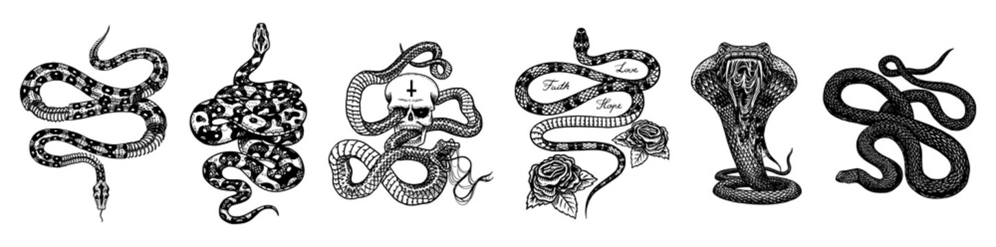 Vintage snake set. Skeleton royal python with skull and roses, milk reptile with sword, Venomous Cobra. Poisonous Viper for poster or tattoo. Engraved hand drawn old sketch for t-shirt or logo.
