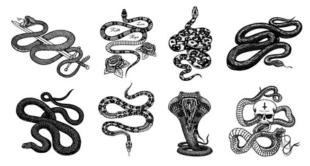 Milk snake with roses, skeleton royal python with skull, reptile with sword, Venomous Cobra. Poisonous Viper for poster or tattoo. Engraved hand drawn old Vintage sketch for t-shirt or logo.