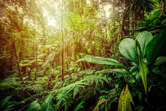 Sun shining over Basse Terre jungle in Guadeloupe