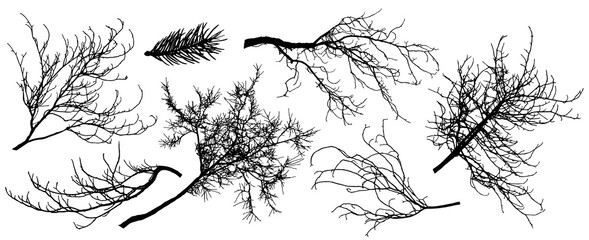 Set of silhouette of branch trees. Vector illustration. Fir tree, chestnut, oak, linden and etc.