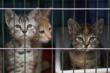 Fototapeta Little kittens in a cage of a shelter for homeless animals obraz