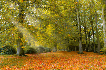 Photo sur Plexiglas Nature Autumn in Holland
