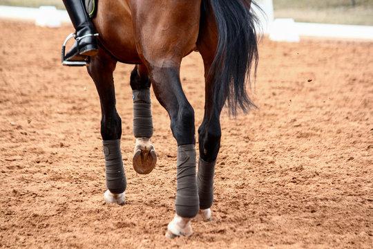 Close up of sport dressage horse legs