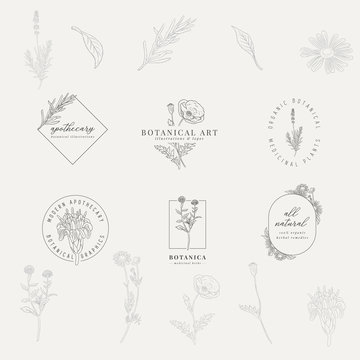 Set of 6 botanical logos. Hand drawn botanical illustrations with various plants and herbs.