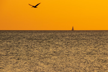 Silhouette of pelican over Gulf of Mexico with sailboat in distance during deep orange sunset