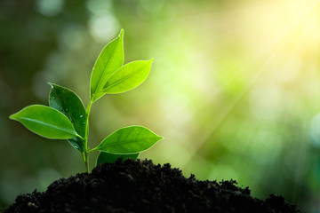 Poster Vegetal Natural green plant with rays of light. Nature and fresh background for environmental saving concept.