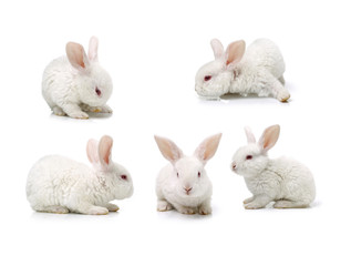 Cute white baby rabbit on a white background