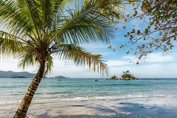 Foto op Aluminium Strand Beautiful view of Castelhanos beach with palm tree and blue sea in Ilhabela, tropical paradise on the coast of Sao Paulo in Brazil
