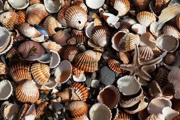 Seashells in a Pile