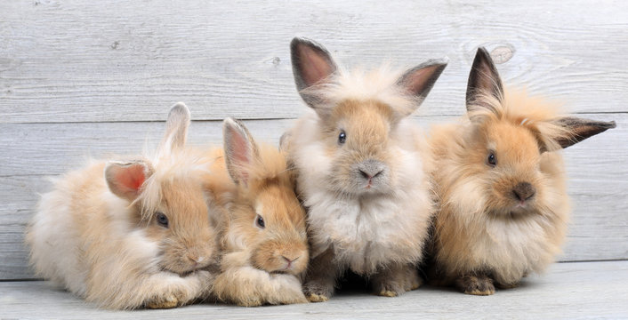 Group of lovely bunny easter rabbits on wooden background. beautiful lovely pets.