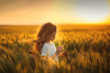Fototapeta Little girl in a wheat field obraz