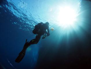 Diving Malta and Gozo - Jellyfish