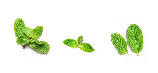 fresh peppermint leaves on isolated white background