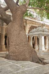 Wall Mural - Ranakpur Jain temple or Chaturmukha, Dharana, Vihara, is a Jain temple at Ranakpur