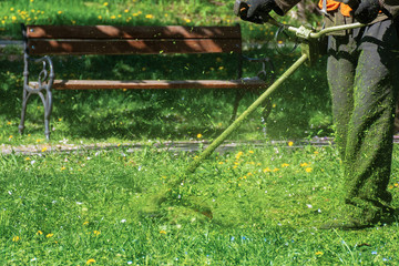 man in coveralls with professional brush cutter mowing grass in the park. green lawn with yellow dandelions. bench in the background. sunny springtime weather. bench in the background