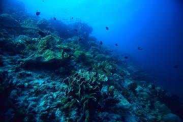 Photo sur Plexiglas Recifs coralliens coral reef underwater / sea coral lagoon, ocean ecosystem