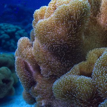 underwater sponge marine life / coral reef underwater scene abstract ocean landscape with sponge