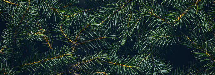 Christmas tree branches. The concept of the new year, christmas, nature. Banner. Flat lay, top view Fotomurales