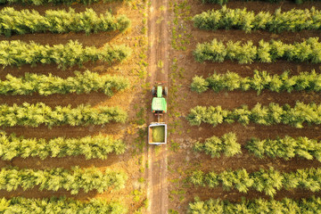 Classing Green John Deere Tractor in an Olive tree plantation, Top down aerial image.