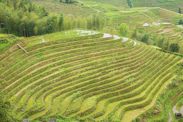Printed roller blinds Rice fields Green colored rice terraces at Ping'ancun village in the Longsheng area near Guilin