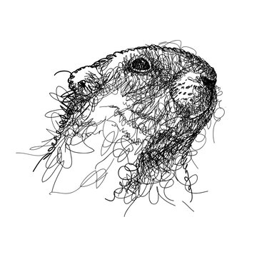 Scribble black groundhog or marmot or woodchuck head isolated on white background.