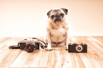 Süsser Mops mit zwei alten Kameras