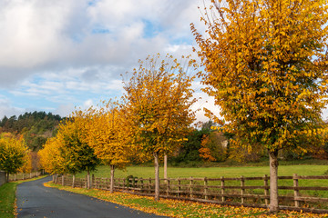 Winding autumn country road through beautiful trees with golden falling leaves on the ground. Roadway through farmlands bordered by wooden fences. Irish countryside landscape.