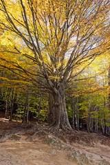 Árbol iluminado en otoño