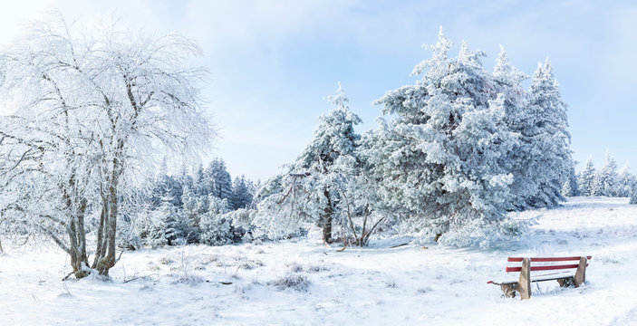 Winter landscape, Winter Forest,  Winter trees covered with snow