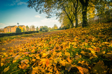 Autumn in the beautiful West End Park in Airdrie with the sun rays and trees with orange leaves in Scotland, UK