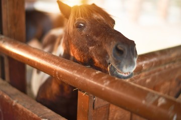 Beautiful brown horse with adorable face waiting at barn