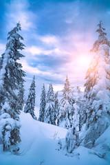 Bright sunshine illuminates the forest