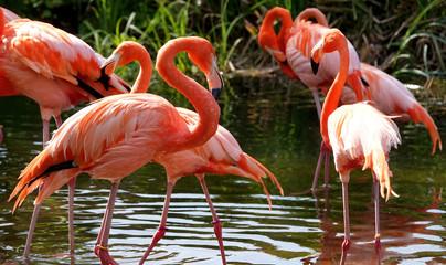 Foto op Canvas Flamingo group of flamingos