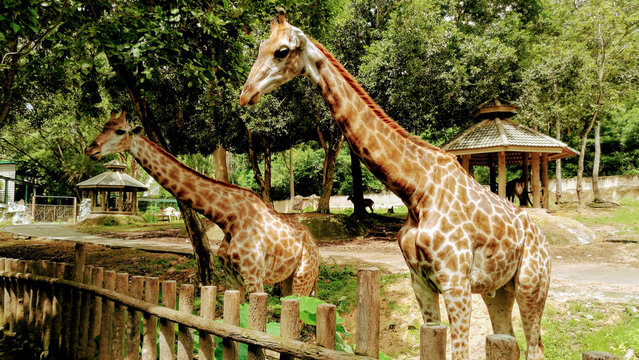 a giraffe with orange pattern is looking at the fence