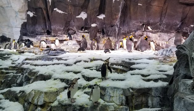 penguins snow ice animals arctic sea world orlando