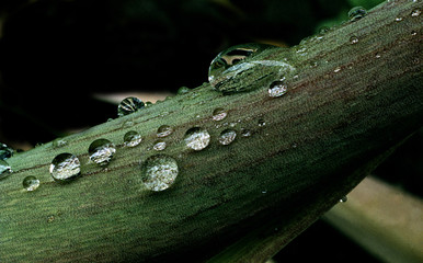 green leaf with waterdrops, sweden